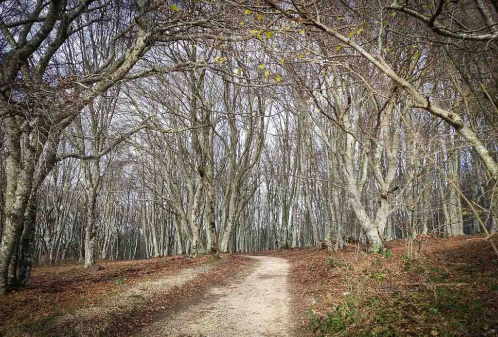 bosco Canfaito novembre