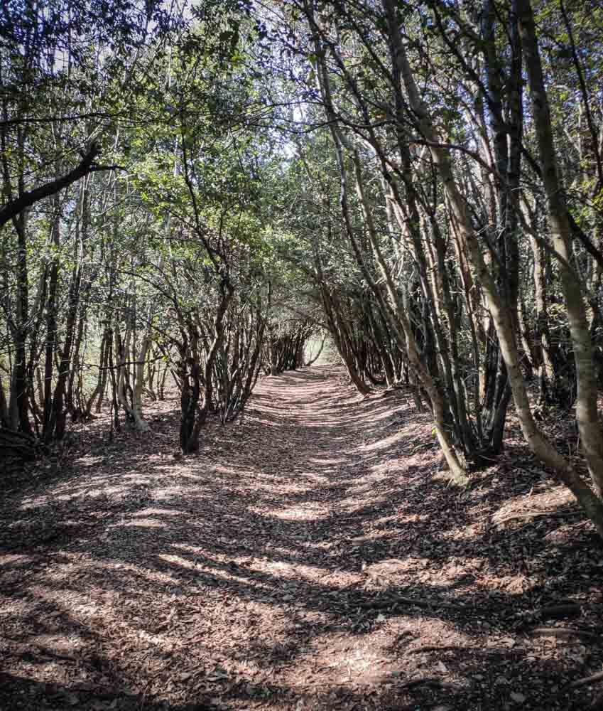 tratto di sentiero dentro il bosco