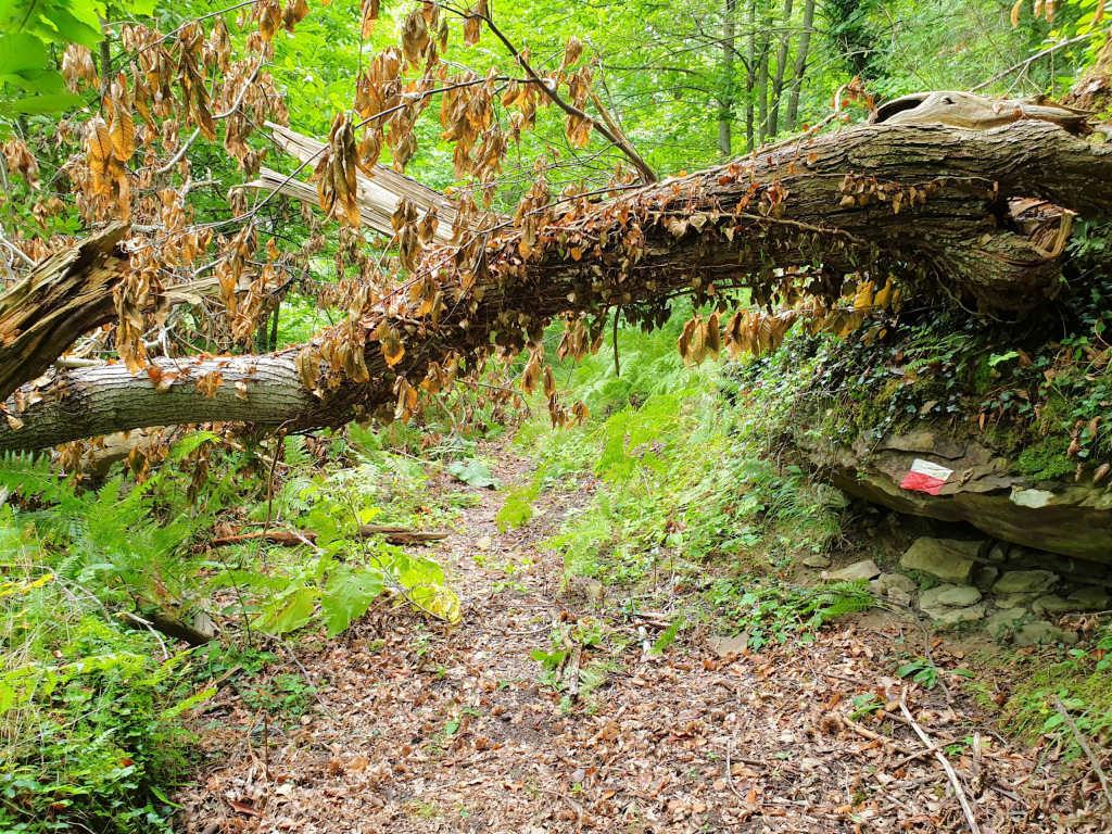 trekking senitiero Arquata del Tronto: Anello di Trisungo