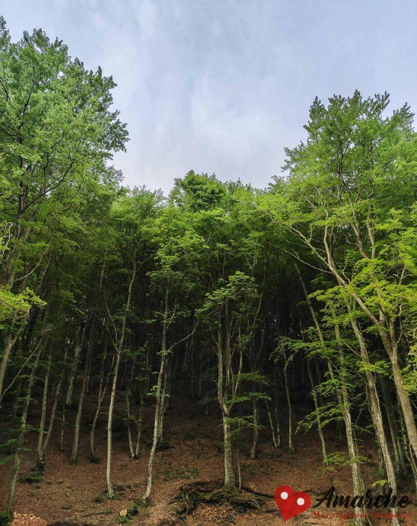 trekking sentiero parco daini monte strega montelago sassoferrato